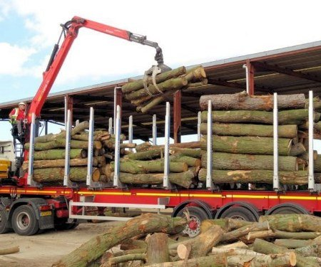 Fresh wood is delivered to our timber yard.